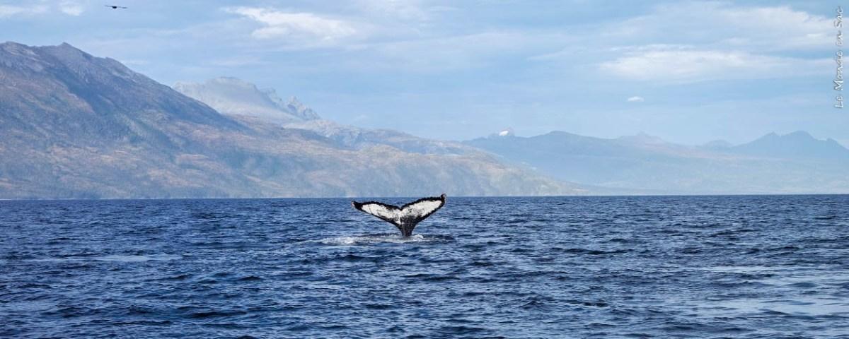 Rencontre avec les baleines du Parc Francisco Coloane au Chili