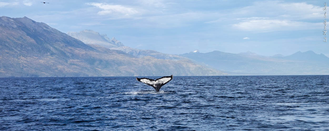 Baleine parc Francisco coloanne