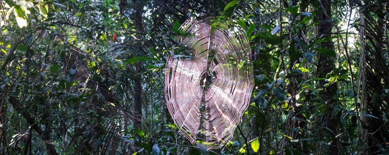 selva Amazonie bolivienne