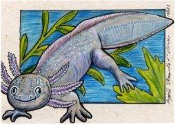 101113-axolotl