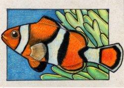 260114-clownfish