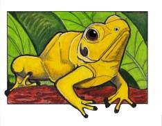 poisondartfrog
