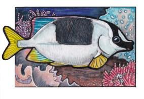 rabbitfish