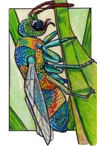 rainbowcuckoowasp