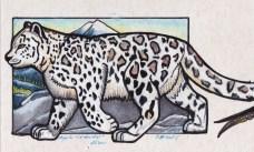 snowleopard2