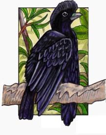 umbrellabird