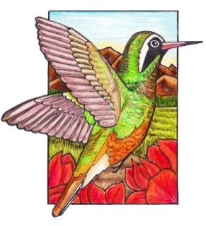 xantushummingbird