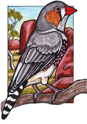 zebrafinch