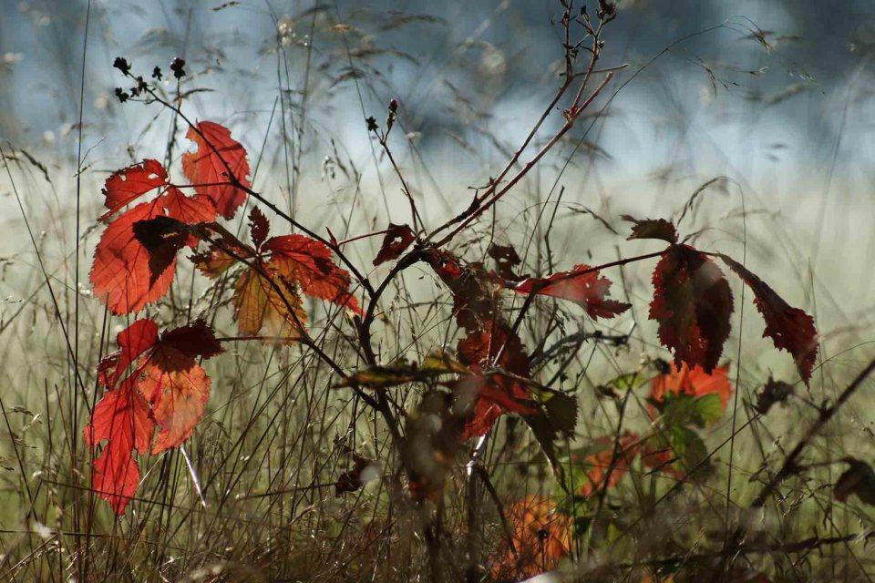 kolor w fotografii