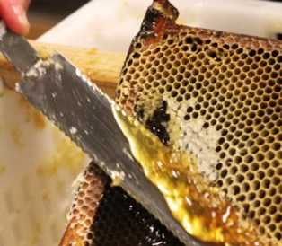 Extraction du Miel- Rucher des Trésoms Annecy
