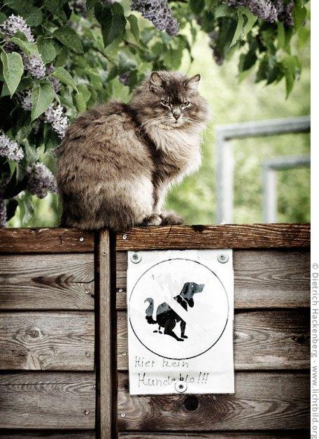 Die Katze wacht. Hier kein Hundeklo!!! Foto © Dietrich Hackenberg