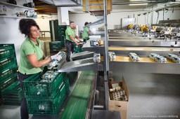 OWI - Ei-Erzeugergemeinschaft Hof Determeyer