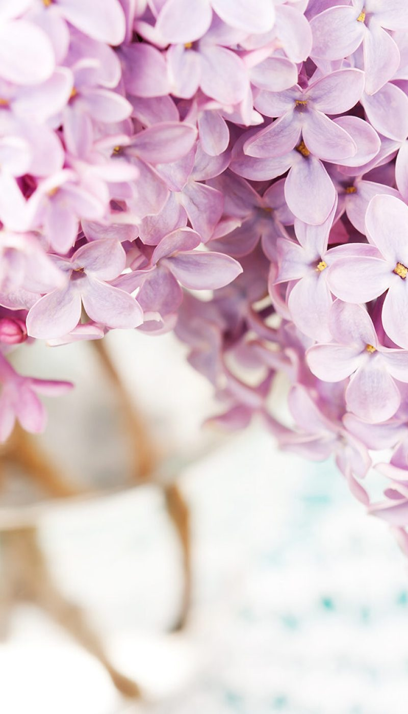 Bunch of beautiful lilac in vase