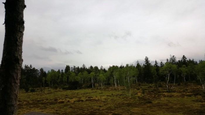 Moorlandschaft im Bayerischen Oberland