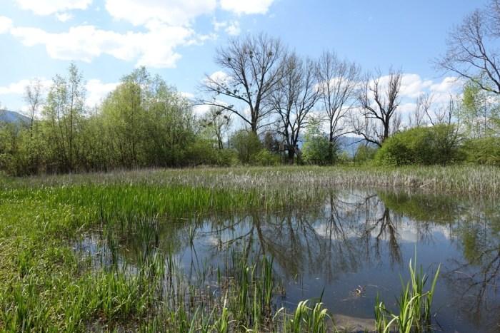 Biotop im Loisach-Kochel-Moor