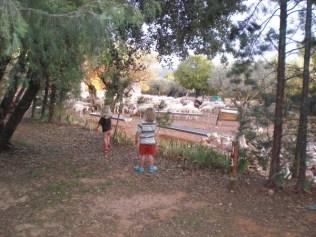 Sheep watching is Alcazar