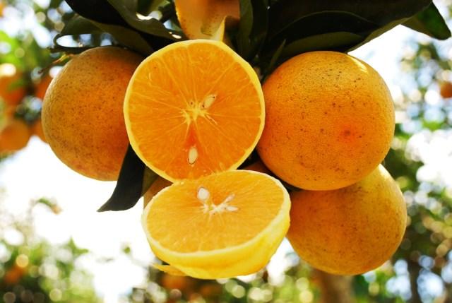 quais frutas não devem faltar na sua cozinha - Laranjas