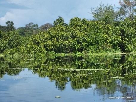 Amazzonia - Colombia