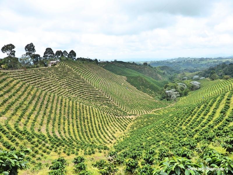 piantagioni di caffé colombia