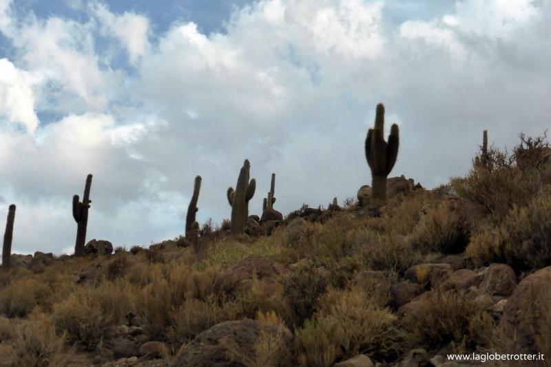 cactus-a-candelabro