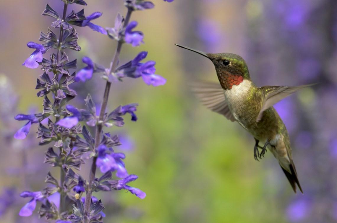 Which Flowers Do Hummingbirds Like Best Longfield Gardens
