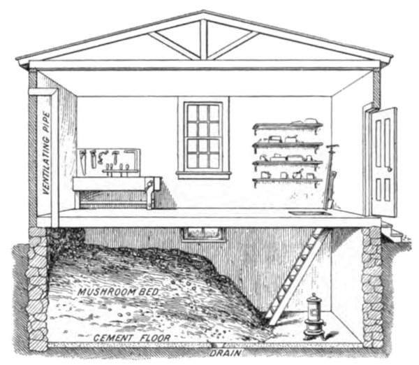 mushroom_cellar_workshop