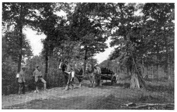country_life_illustrated_04