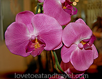 Flowers - Purple Orchids
