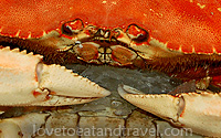 Seafood - Dungeness Crab
