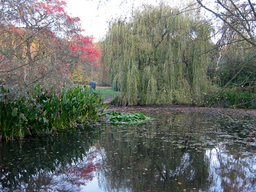 Thomson's Pond at Isabella Plantation, Richmond Park, London - © L. Silberstein