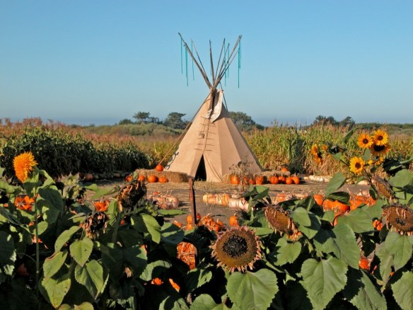 Harvest Pumpkins on a Farm – © LoveToEatAndTravel.com