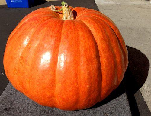 Most Beautiful Pumpkin at Half Moon Bay World Championship Pumpkin Weigh-Off 2013 – © LoveToEatAndTravel.com
