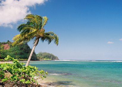 Hawaii Beach and Palm Tree - Photo Credit iStock