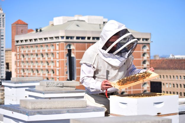 Bee keeper on Rooftop Bee Sanctuary, Clift Hotel, SF - photo credit: CLIFT Hotel