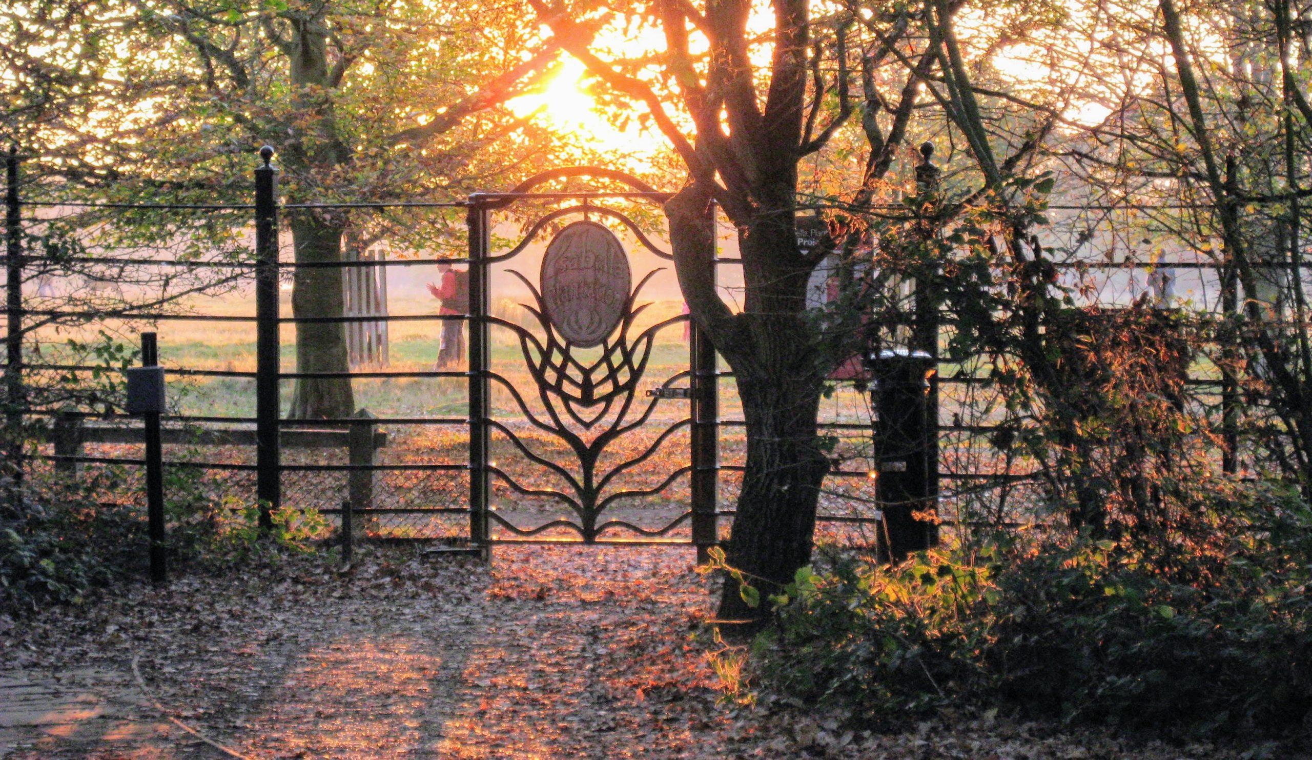 Isabella Plantation in Richmond Park, London