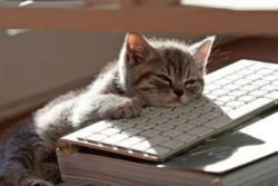 Cat resting on a keyboard