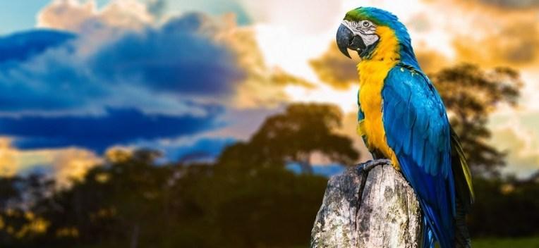 Amazon River Cruises - Macaw in Brazil