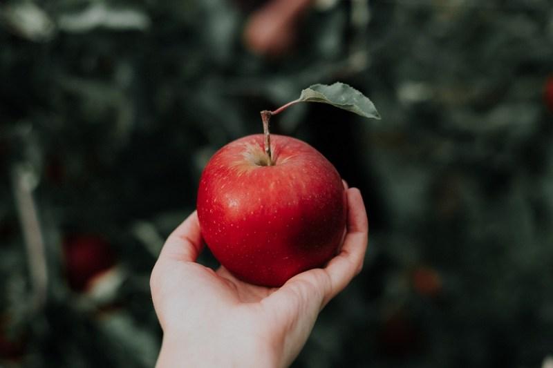 Apfel in der Hand vor grünen Ästen