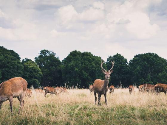 ruminant animals like deer get vitamin b12