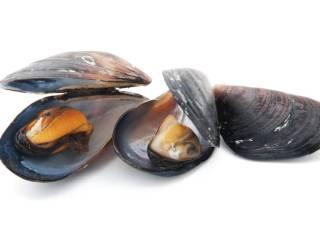 Muscheln Vitamin-B12-haltige Lebensmittel