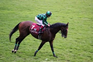 2014年凱旋門賞 apres-course-cheval-just-a-way-fatigue