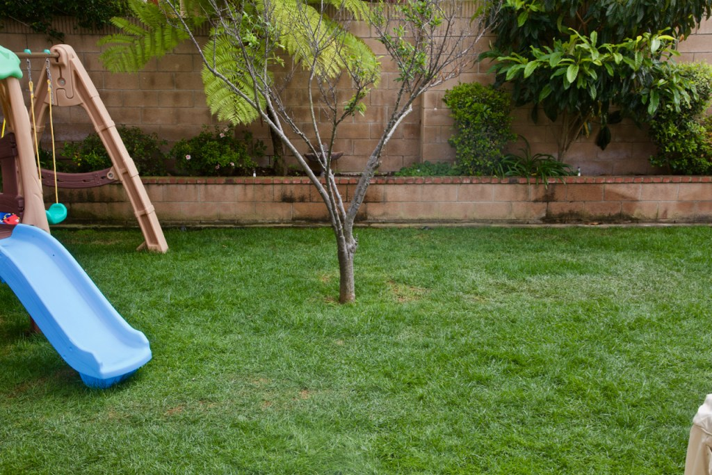 Get Sunday lawn care vs. Scotts.