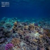 Coral Reefs in Comiran Island