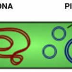 Some useful numbers for plasmid DNA extraction