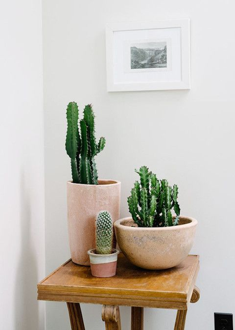 Plantes grasses en pot de couleur terracotta