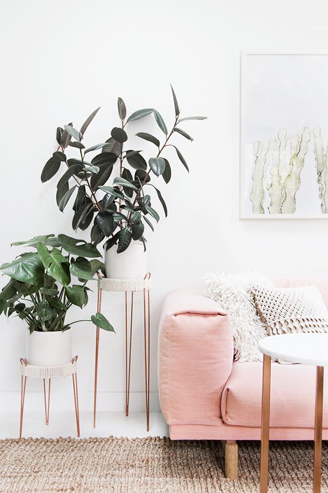 Des plantes vertes à côté d'un sofa rose