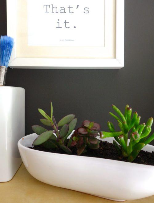 Three succulent plants