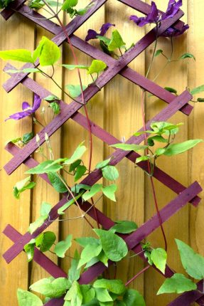 trellis rich berry garden shades