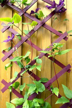 trellis rich berry garden shades