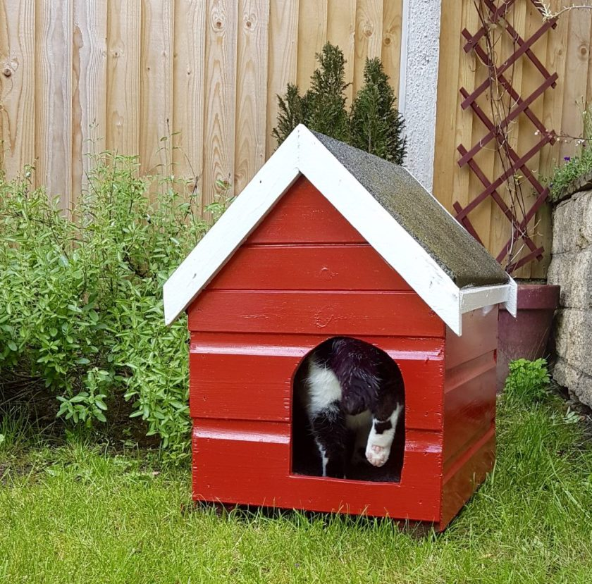Cat Kennel Makeover